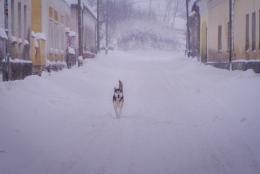 """Nyírő Dóra""""Kutya a hóban"""""""